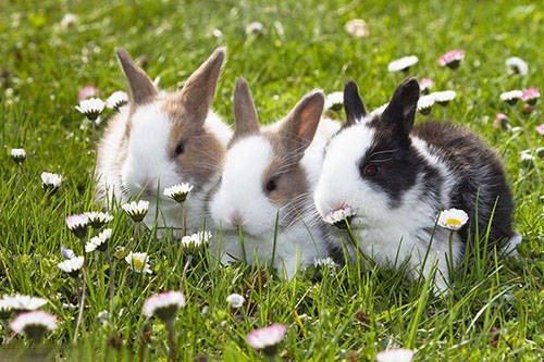 兔子有什么习性?怎么喂兔子?