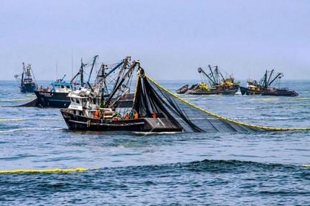秘鲁南部的鳀鱼生产季节从3月10日开始,配额为409,000吨